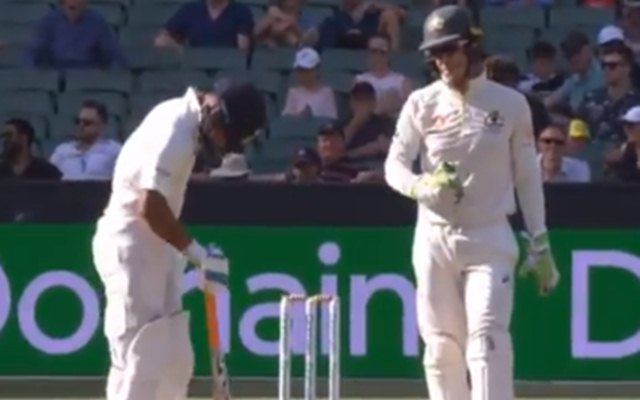 Tim Paine taunts Rishabh Pant for being dropped out of ODI squad