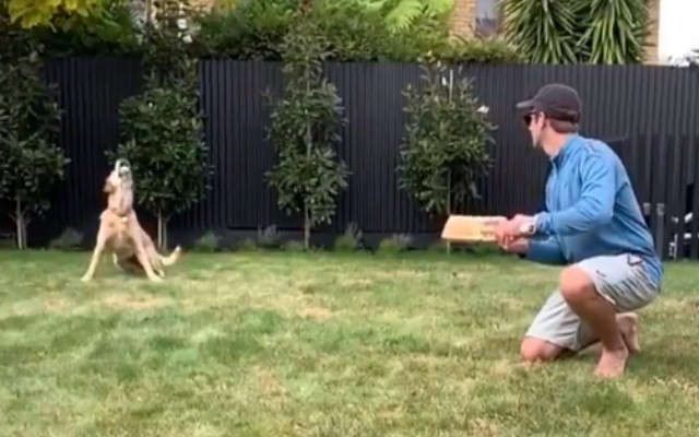 Kane Williamson plays cricket with his dog during his home quarantine